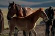 Desert Wild Horses