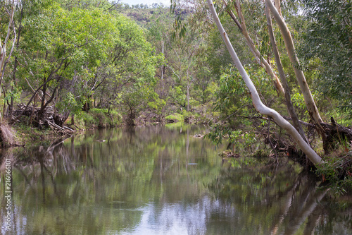 Fotografía  Tranquil Ibis creek near Irvinebank on the Atherton Tableland in Queensland, Aus