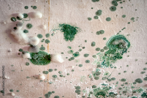Valokuva  concentric circles of thickets of two kinds of mold on the ceiling, green and white