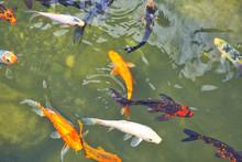 Fish In An English Garden