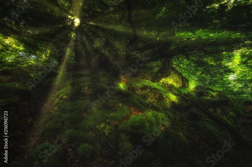 Poster Road in forest rayos de sol en el bosque