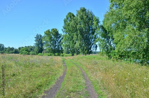 Foto op Canvas Pistache Beautiful landscape the wood in the summer in Russia Siberia