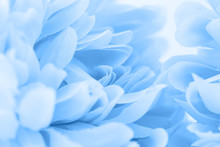 Beautiful Blue Flowers Made Wi...