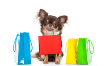 Shopping Dog With Bag