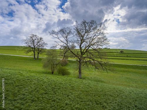 Tree on a meadow, Spring, Upper Bavaria, Bavaria, Germany, Europe