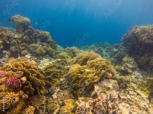 Staande foto Koraalriffen Abstract underwater scene, sun rays and coral reef..
