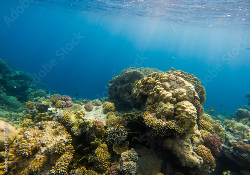 Tuinposter Koraalriffen Beautiful coral reef and tropical fish underwater, marine life.