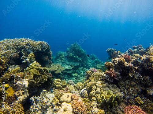 Beautiful coral reef and tropical fish underwater, marine life.