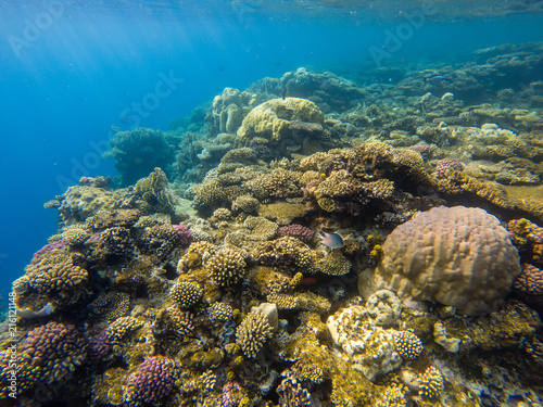 Staande foto Koraalriffen Beautiful coral reef and tropical fish underwater, marine life.