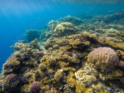 Fotobehang Koraalriffen Beautiful coral reef and tropical fish underwater, marine life.