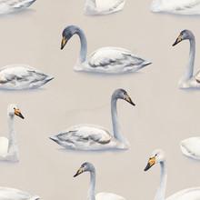 Watercolor Illustration Of White Mute Swan. Seamless Pattern