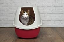 Cute Tabby Cat Sitting In A Re...