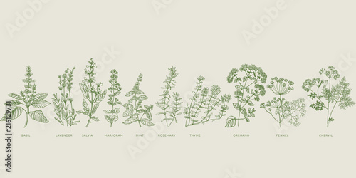 Obraz French cooking herbal sketch set - fototapety do salonu