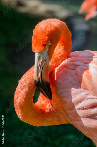 Foto op Plexiglas Flamingo Pink Flamingo Face