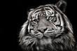 Black and white image of a tiger in high quality