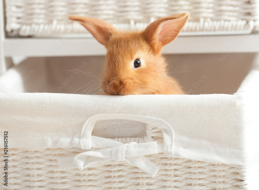 Fototapety, obrazy: Cute fluffy bunny in wicker basket at home