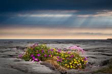 Flowers Growing In Limestone R...