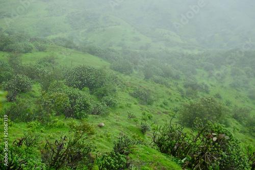 Keuken foto achterwand Olijf Lush green monsoon nature landscape mountains, hills, Purandar, Maharashtra, India