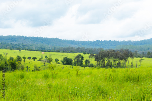 Fototapety, obrazy: Meadow and trees at Thung Salaeng Luang , Phetchabun in Thailand.