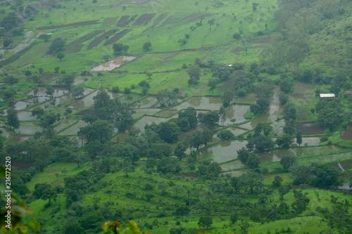 Fotobehang Olijf Lush green monsoon nature landscape mountains, hills, Purandar, Maharashtra, India