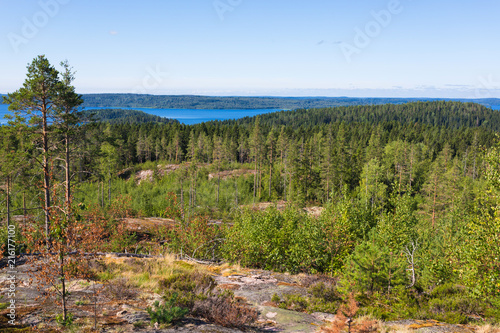 Fotobehang Wit The green forest of fir, spruce an pine trees near the shore of the Ladoga in Russia lake in the sunny summer day