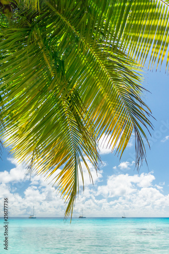 Foto op Aluminium Oceanië Paradise view of Rangiroa atoll, French Polynesia
