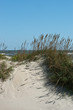 Sea Oats Summer 1