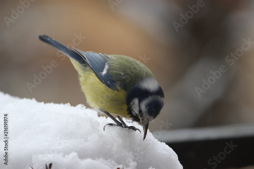 Spoed Foto op Canvas Vogel bird in snow