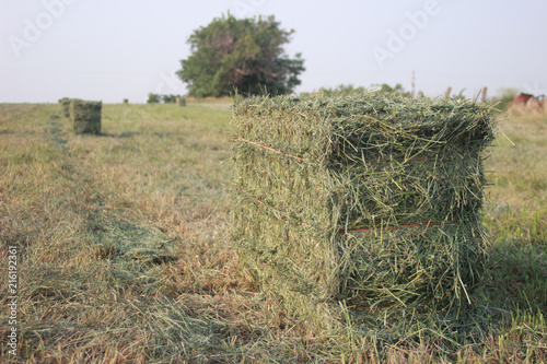Small Square Alfalfa Hay Bales in Field Canvas Print