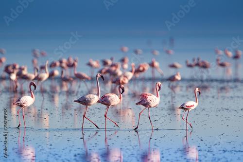Fototapeta Fenicotteri rosa e fenicotteri minori a Lake Natron in Tanzania