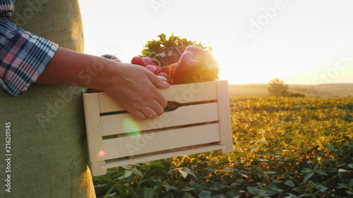 The farmer is carrying a wooden box with fresh vegetables. Goes along the field at sunset. Fresh vegetables directly from the field concept
