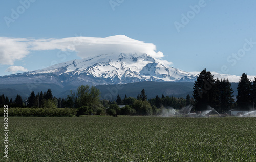 Fotografía  Mt Hood towering over a field on a clear spring day