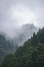 Coniferous Mountain Forest In The Fog