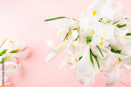 Spoed Foto op Canvas Iris Beautiful White Iris Flowers on Pink Background