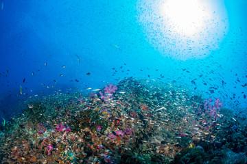 Fototapeta na wymiar Tropical fish on a beautiful, healthy tropical coral reef