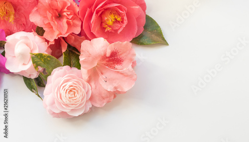 High angle view of pink camellias and azaleas on white table with copy space - nature background (selective focus)
