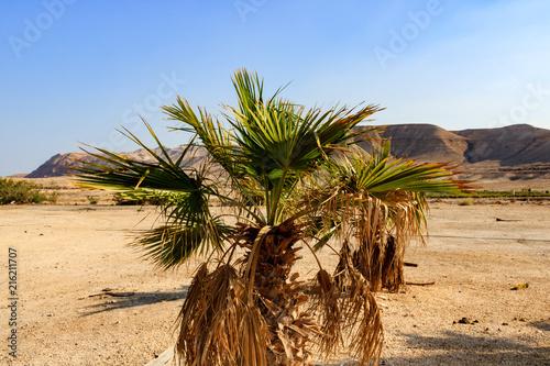Israel desert landscape. Canvas Print