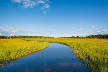Wetlands In Egg Harbor Townshi...