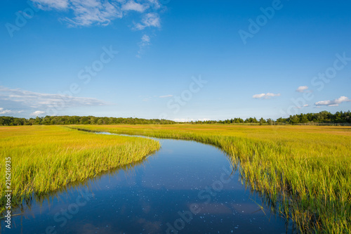 Fotografia Wetlands in Egg Harbor Township, New Jersey