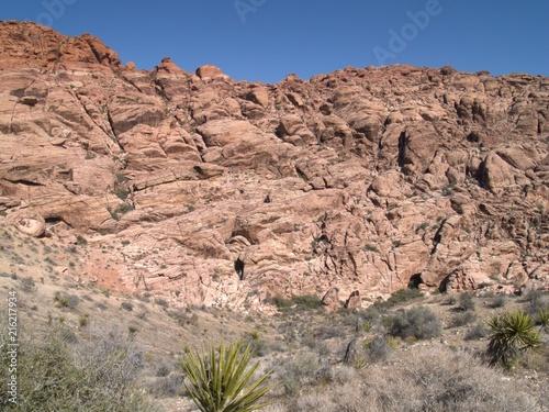 Foto op Aluminium Zalm Nevada Desert