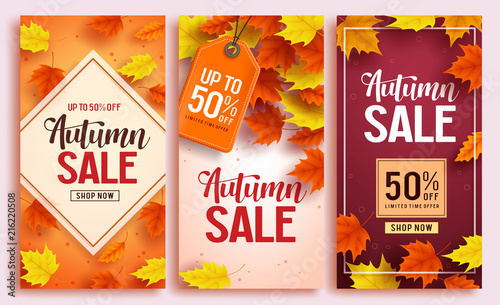 Fototapeta Autumn sale vector poster design set with colorful maple leaves element in background and sale discount text for fall season shopping promotion. Vector illustration.  obraz