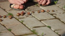 The Little Lady Is Playing A Snail Race In The Garden
