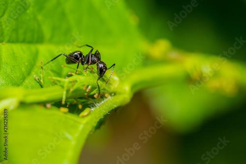 Plakat Mrówka na liściu patrzy w dół