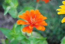 Flowers 3