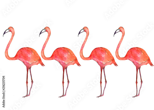 Foto op Aluminium Flamingo Watercolor of pink flamingos isolated on a white background.