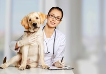 Beautiful Young Veterinarian With A Dog