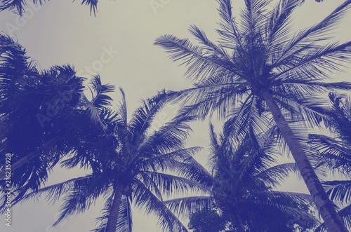 Spoed Foto op Canvas Palm boom coconut palm tree