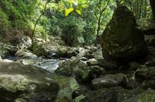 Creek Running Through Bush