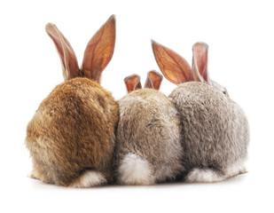 Three rabbit back.