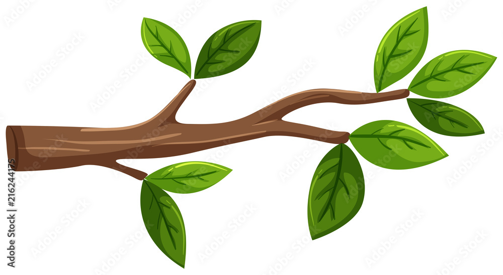 Fototapeta Tree branch with leaf on white background